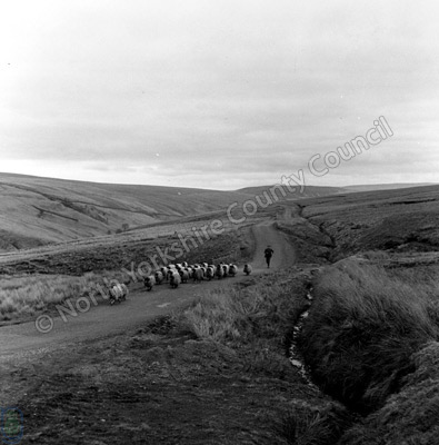 Shepherding, West Stonesdale